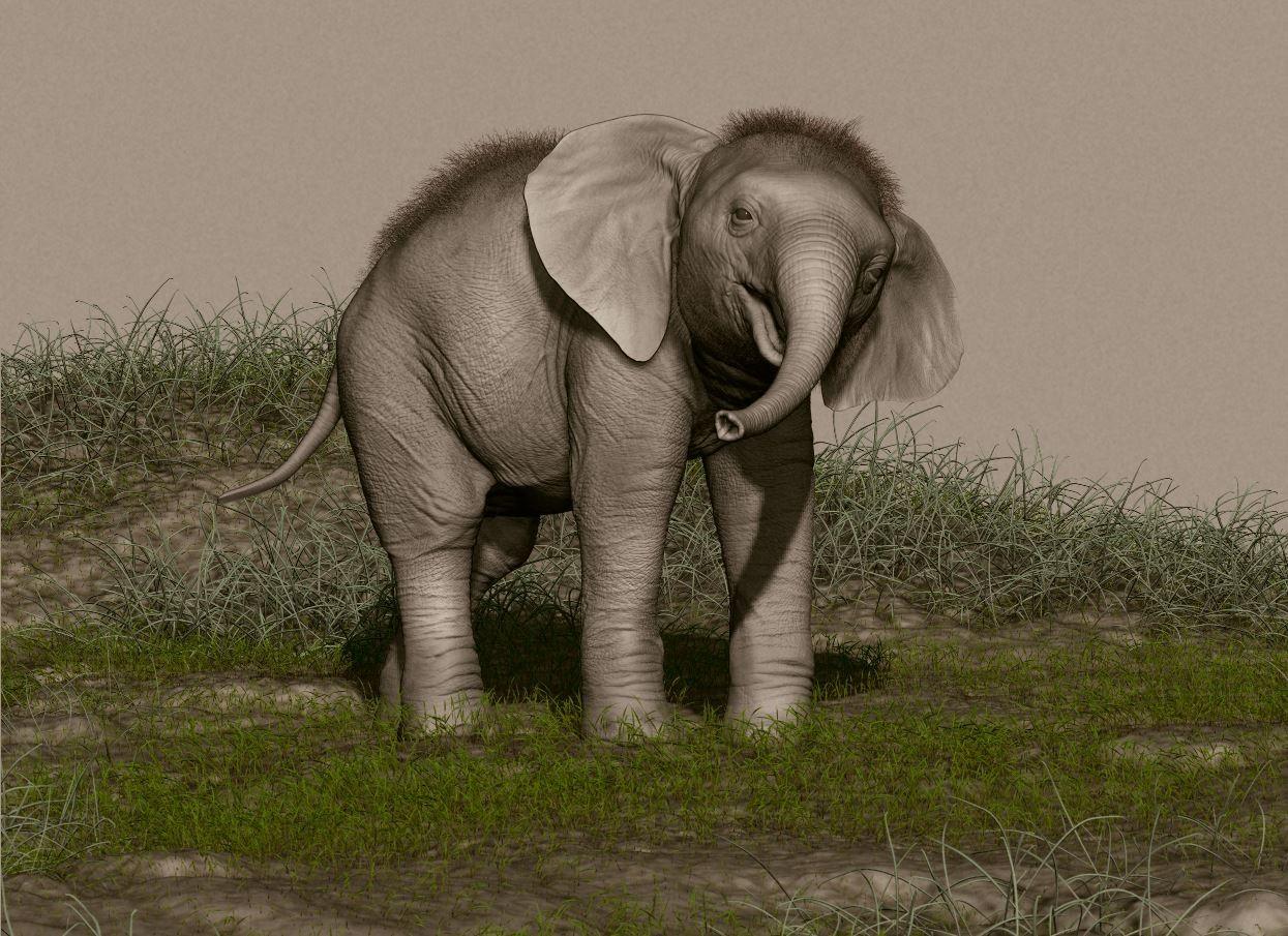 rafa-zabala-elephant-02