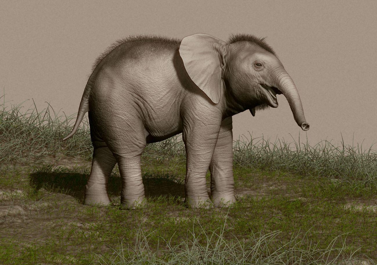 rafa-zabala-elephant-03